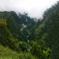 Chilapata Forests Siliguri Package Tour