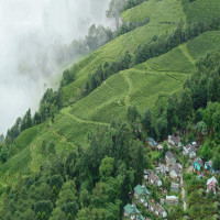 Darjeeling Railway Sight Seeing Tour