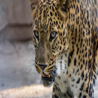 National Zoological Park Trip