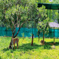 Bannerghatta National Park Package Tour