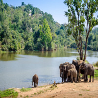 Bannerghatta National Park Places to See