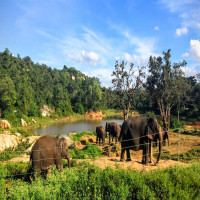 Bannerghatta National Park Sightseeing