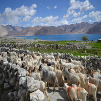 Pangong Lake Travel