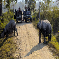 Kaziranga National Park Sight Seeing Tour