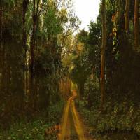 Chilapata_Forests_Siliguri_Attractions