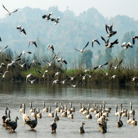 Harike Wetland and bird sanctuary how to reach