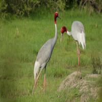 Keoladeo National Park Sight Seeing Tour