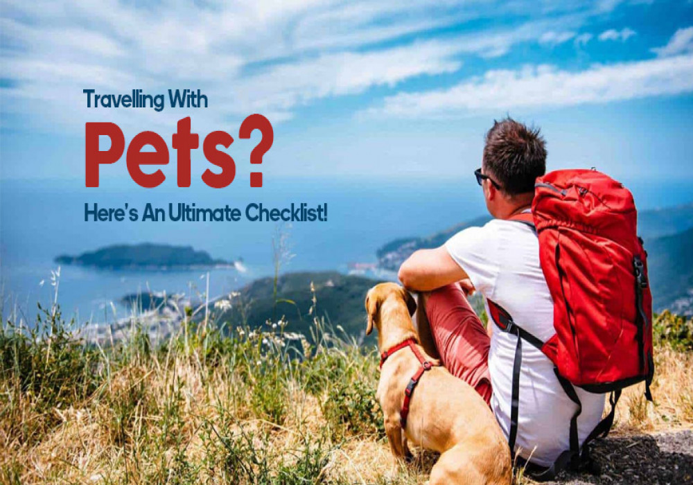 tips_for_traveling_with_pets
