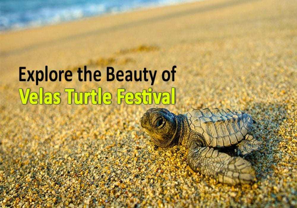 Cover_Turtle_Festival