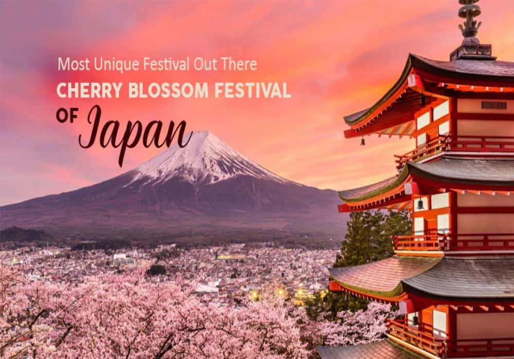 Cherry_Blossom_Festival_in_Japan