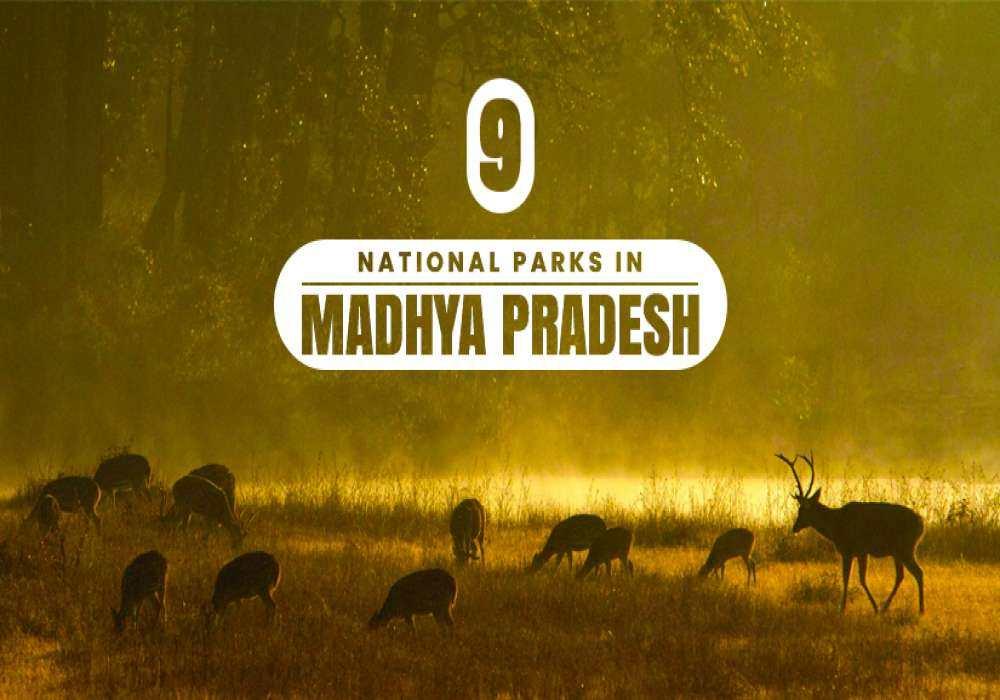 9_Best_National_Parks_In_Madhya_Pradesh