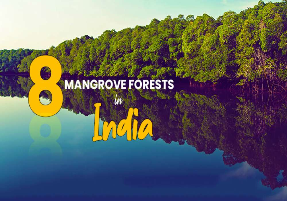 8_Mangrove_Forests_In_India