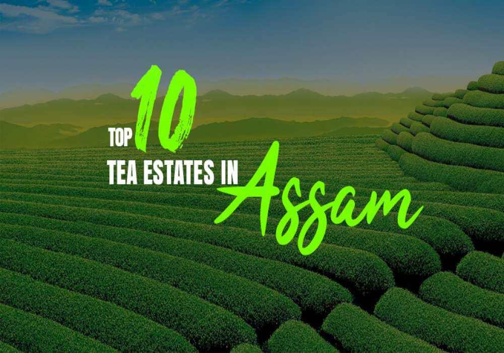 10_Tea_Estates_in_Assam