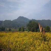 Daringbadi_Odisha