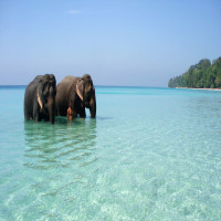 Portblair Sight Seeing Tour