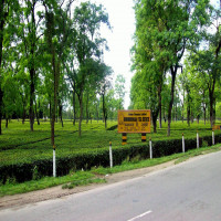 Dibrugarh Travel