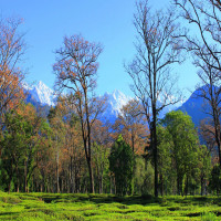 Kangra City Tea Gardens