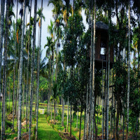 Coorg Package Tour