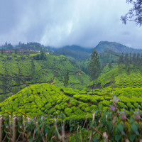 Munnar Sight Seeing Tour