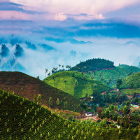 Munnar_Attractions