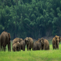 Thekkady_Package_Tour