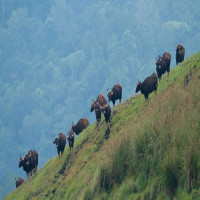 Thekkady_Travel Plan