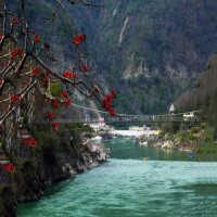 Rishikesh Sight Seeing Tour