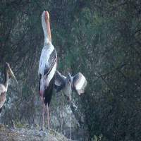 Bharatpur Sight Seeing Tour