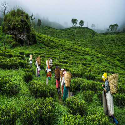 Assam Tea Festival Places to See