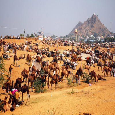 Pushkar Fair Travel