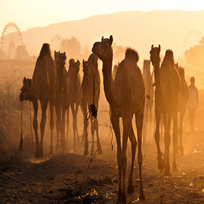 Pushkar_Fair_Tours