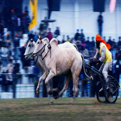 Kila_Raipur_Sports_Festival_Attractions