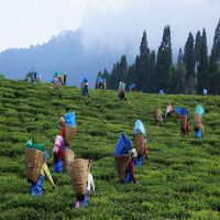 Assam_Tea_Festival_Mountains