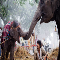 Sonepur_Mela_Attractions