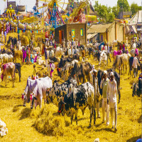 Nagaur_Cattle_Fair_Attractions
