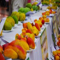 Mango_Festival_Attractions