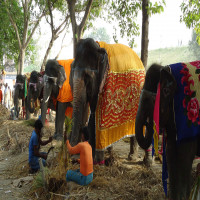 Sonepur Mela Places to See