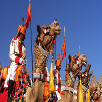 Desert_Festival_Attractions