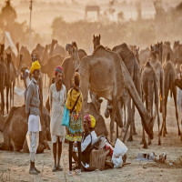 Pushkar Fair Package Tour