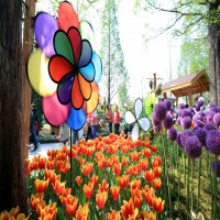 International Flower Festival Sightseeing