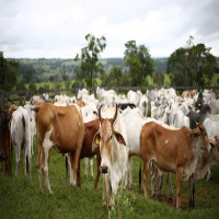 Nalwari_Cattle_Fair_Attractions