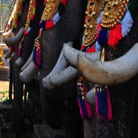 Uthralikavu Pooram Package Tour